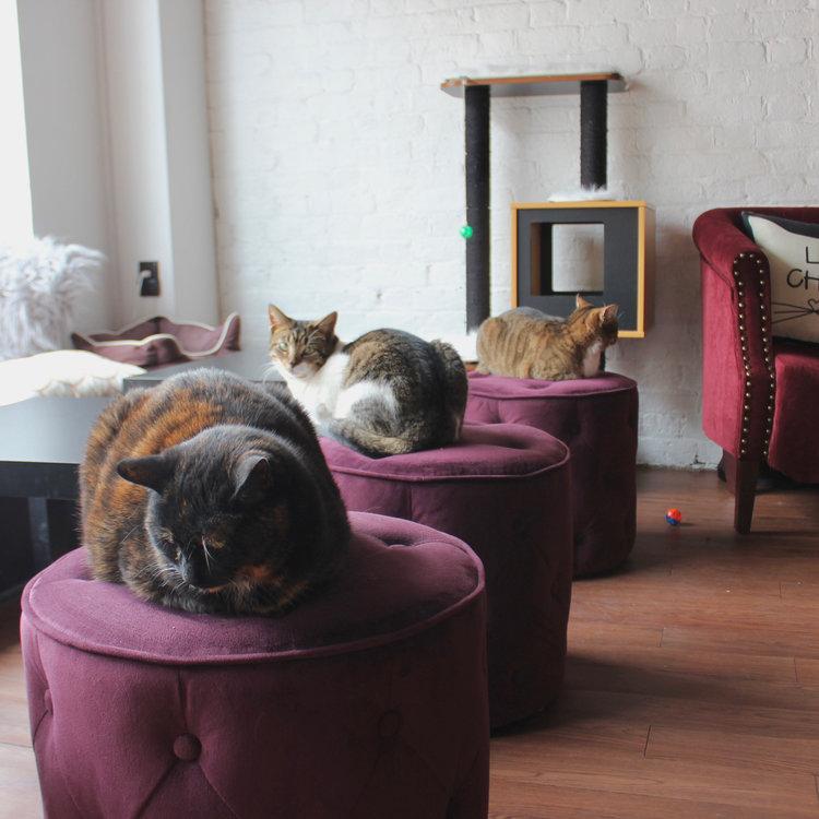 pounce cat cafe