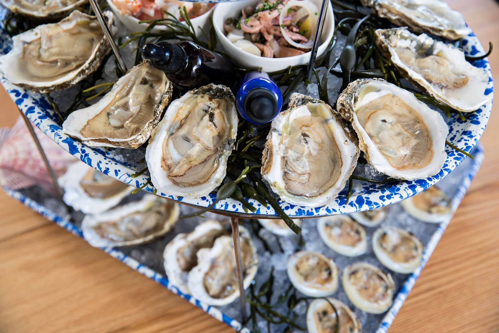 Oysters in Charleston
