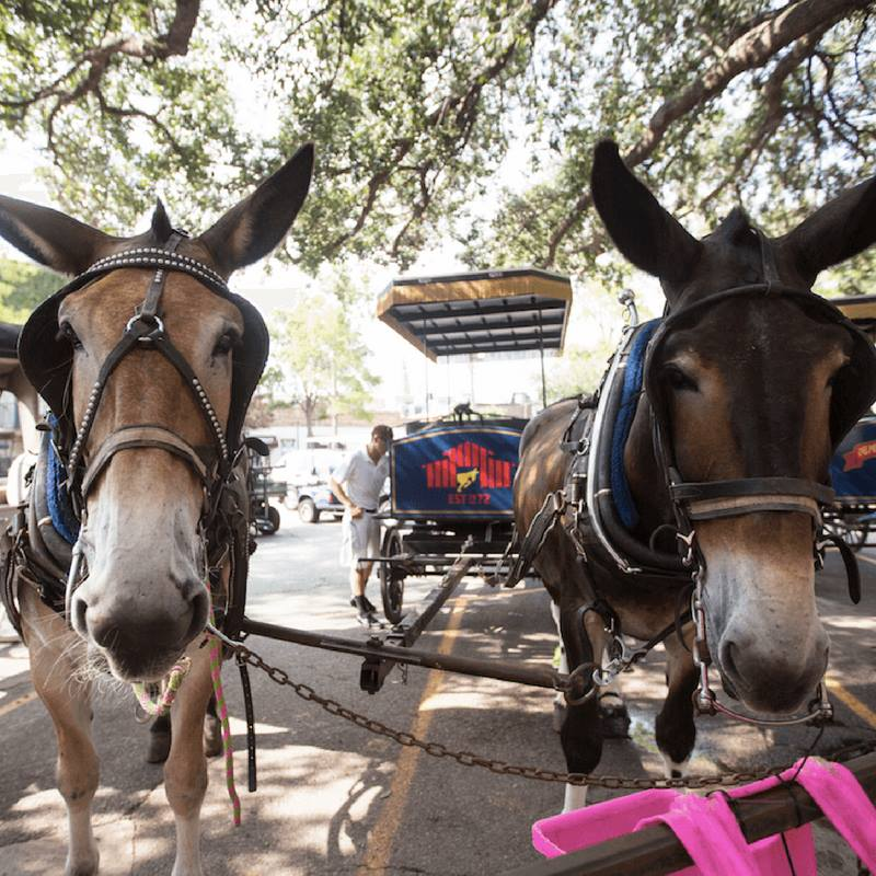 charlestonians can stop worrying about carriage horses